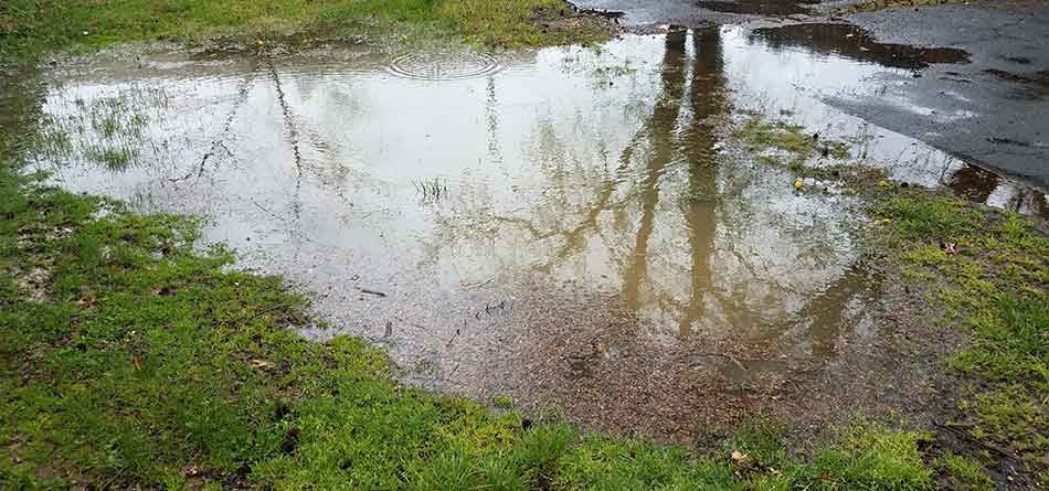 An example of what can happen when a drain field is improperly maintained in Winter Haven, FL.